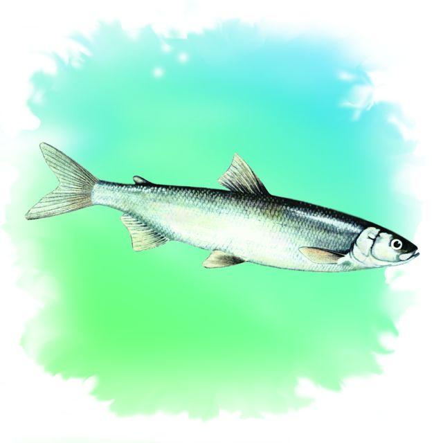 ракета для прикормки рыбы как работает