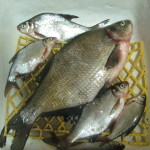 Рыбалка 2.02.13