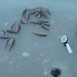 Открытие зимней рыбалки 2013. Перволёдные окуни.