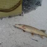 Открытие зимнего рыболовного сезона 2015 в Лепеле