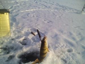ловля рыбы на Дубровском