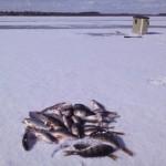 Сезон зимней рыбалки 2016 закрыт