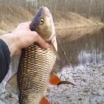 Сходил на рыбалку — поймал голавля