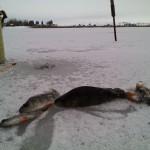 Раннее открытие зимнего рыболовного сезона в Лепеле