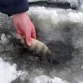 зимняя рыбалка окунь